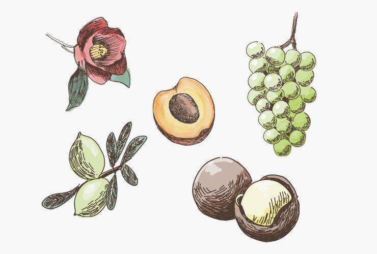 果物・花イラスト