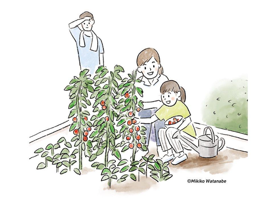 家庭菜園の親子のイラスト