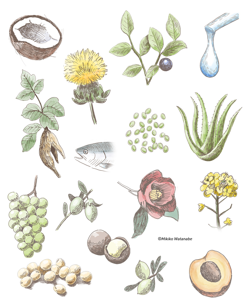 植物、花、ナッツイラスト