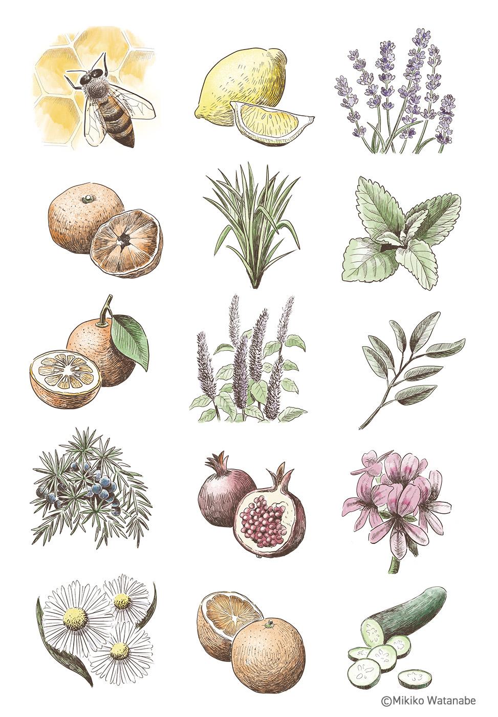 植物、フルーツ、ハーブの線画
